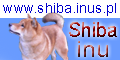 http://www.shiba.inus.pl